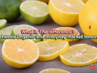 lemon-organic foodformyhealth